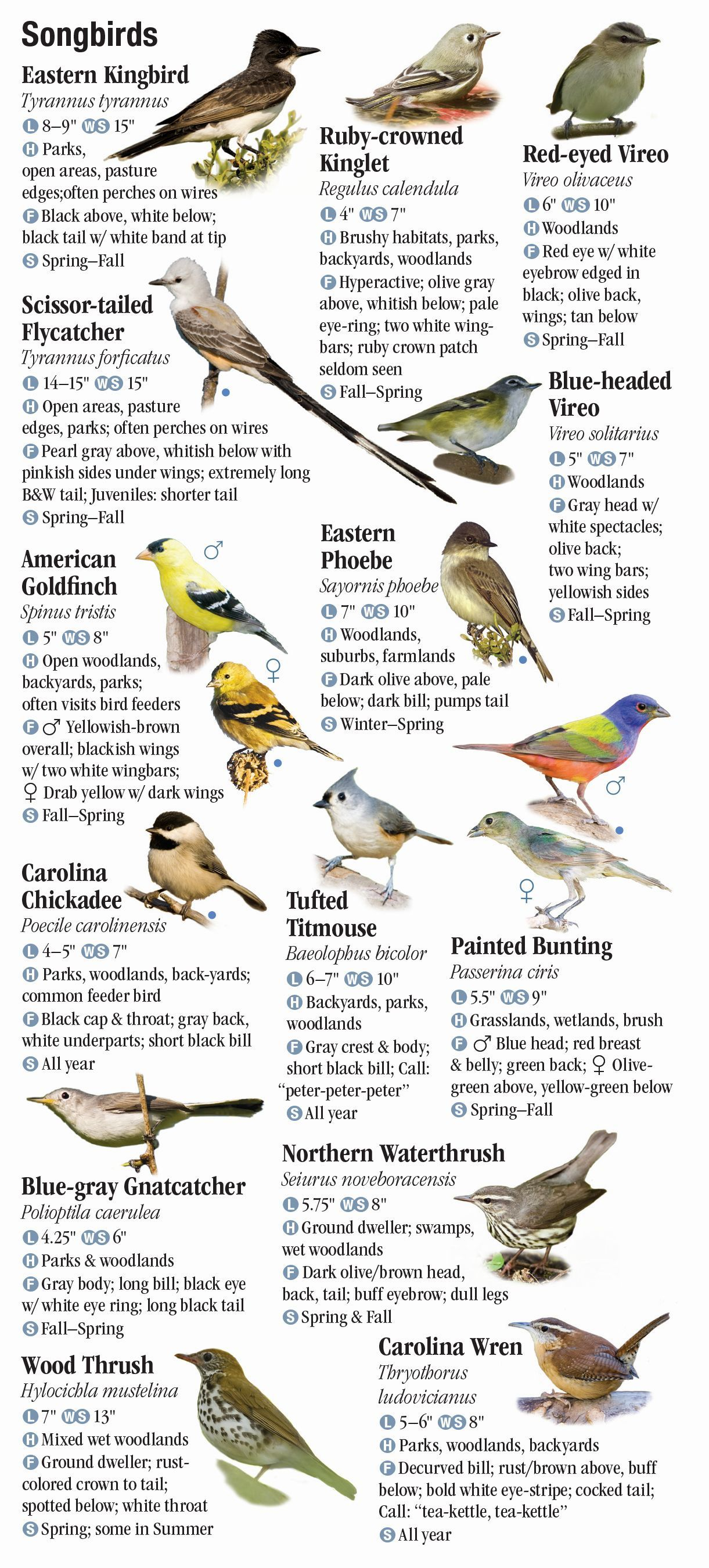 Aaa San Antonio >> Birds of Southeast Texas and the Upper Texas Coast – Quick ...