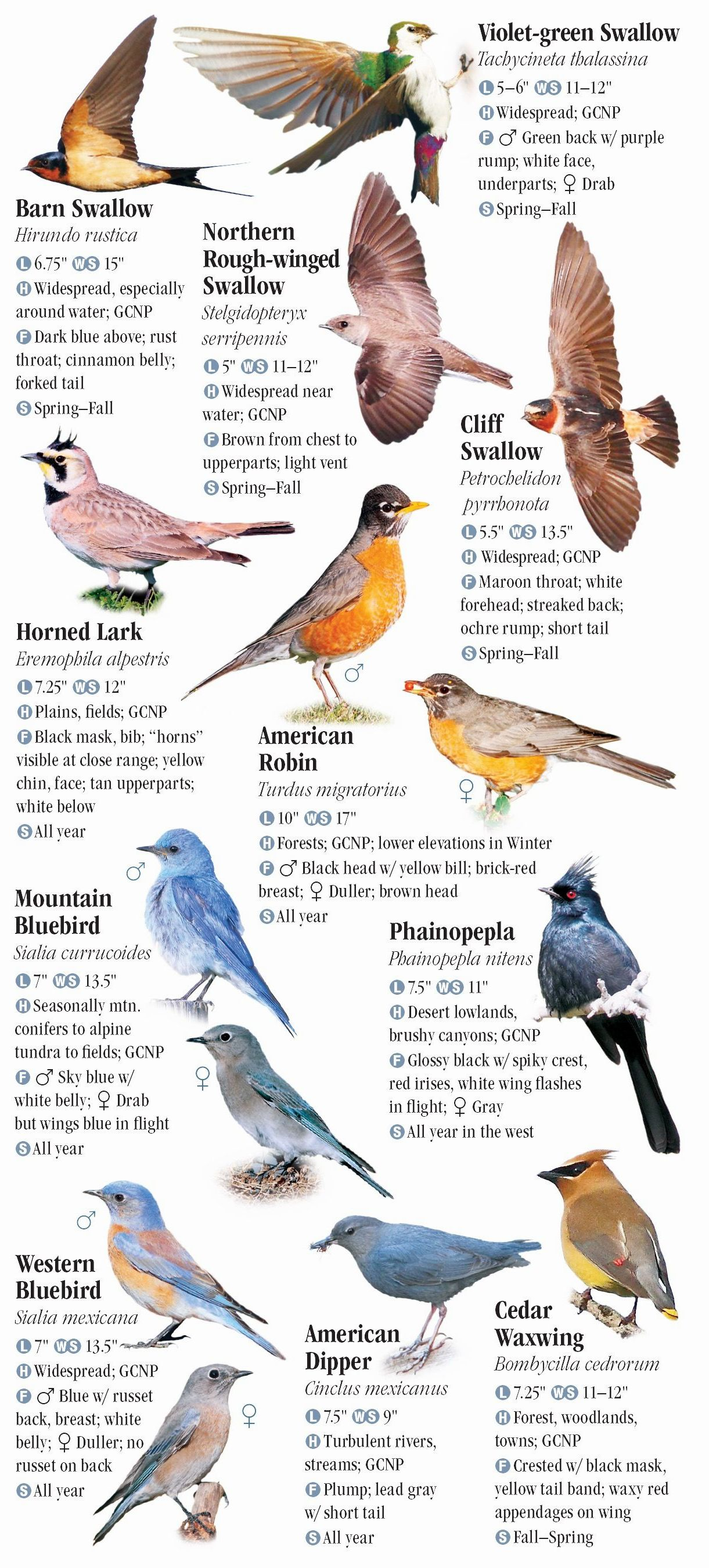 Birds Of Northern Arizona Including Flagstaff Sedona And Grand Canyon National Park Quick