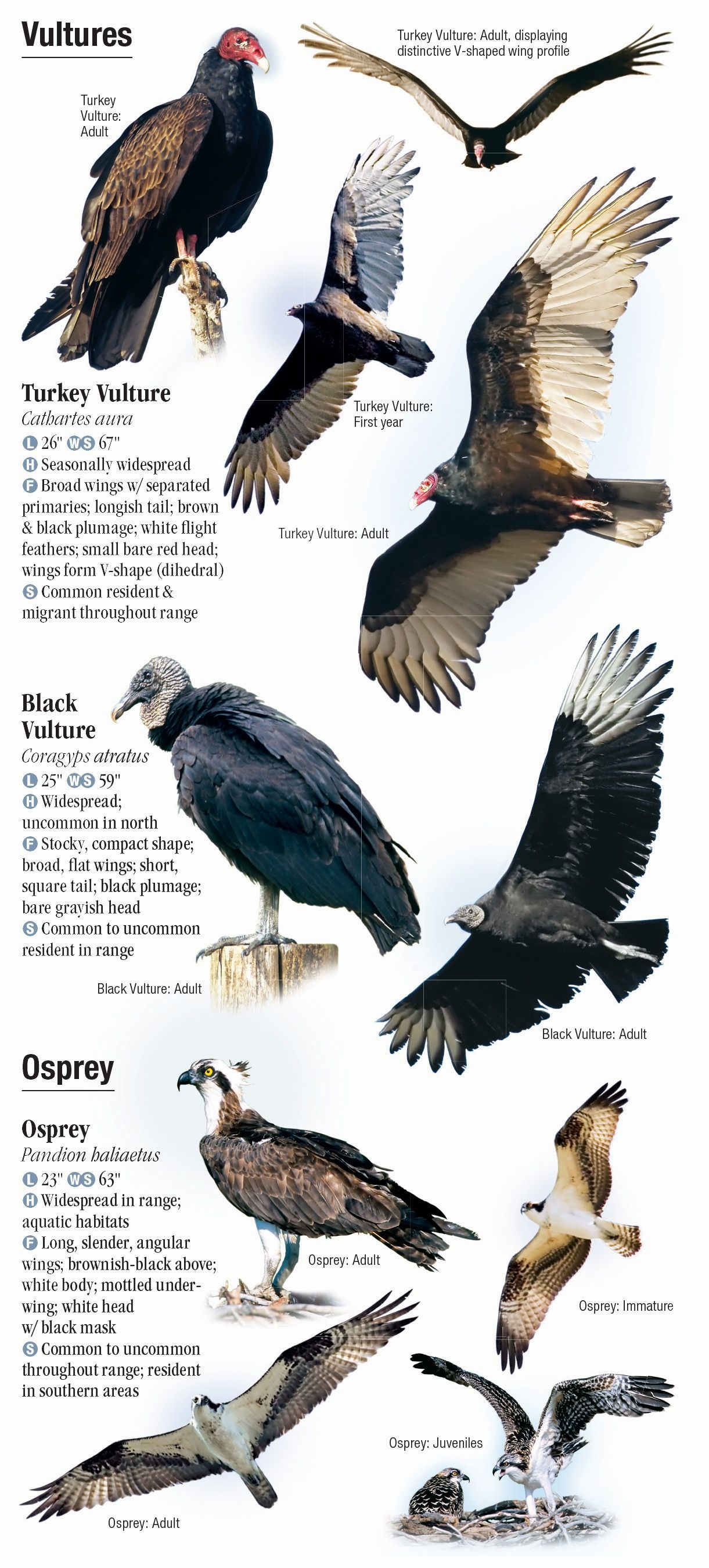 Raptors Of Eastern North America Quick Reference Publishing
