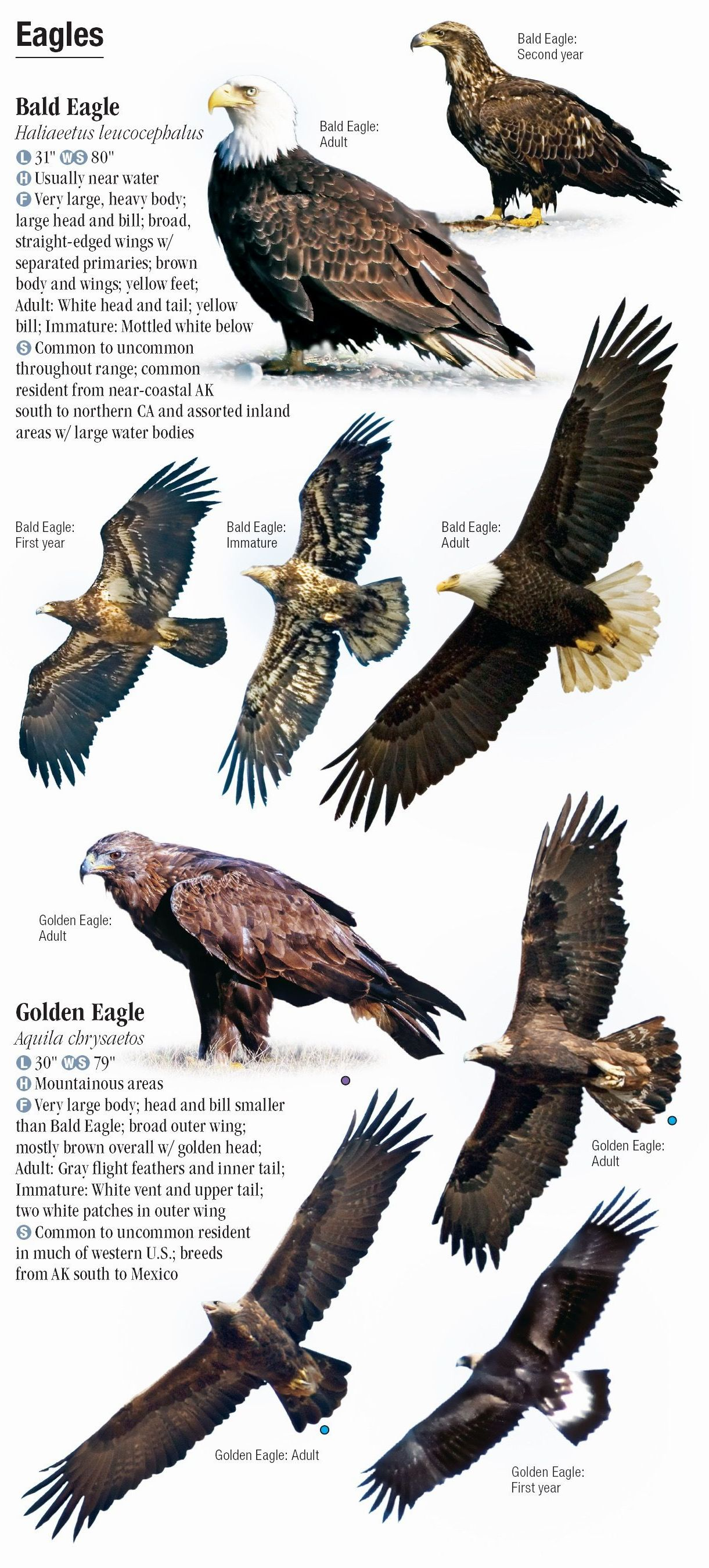 Raptors Of Western North America Quick Reference Publishing