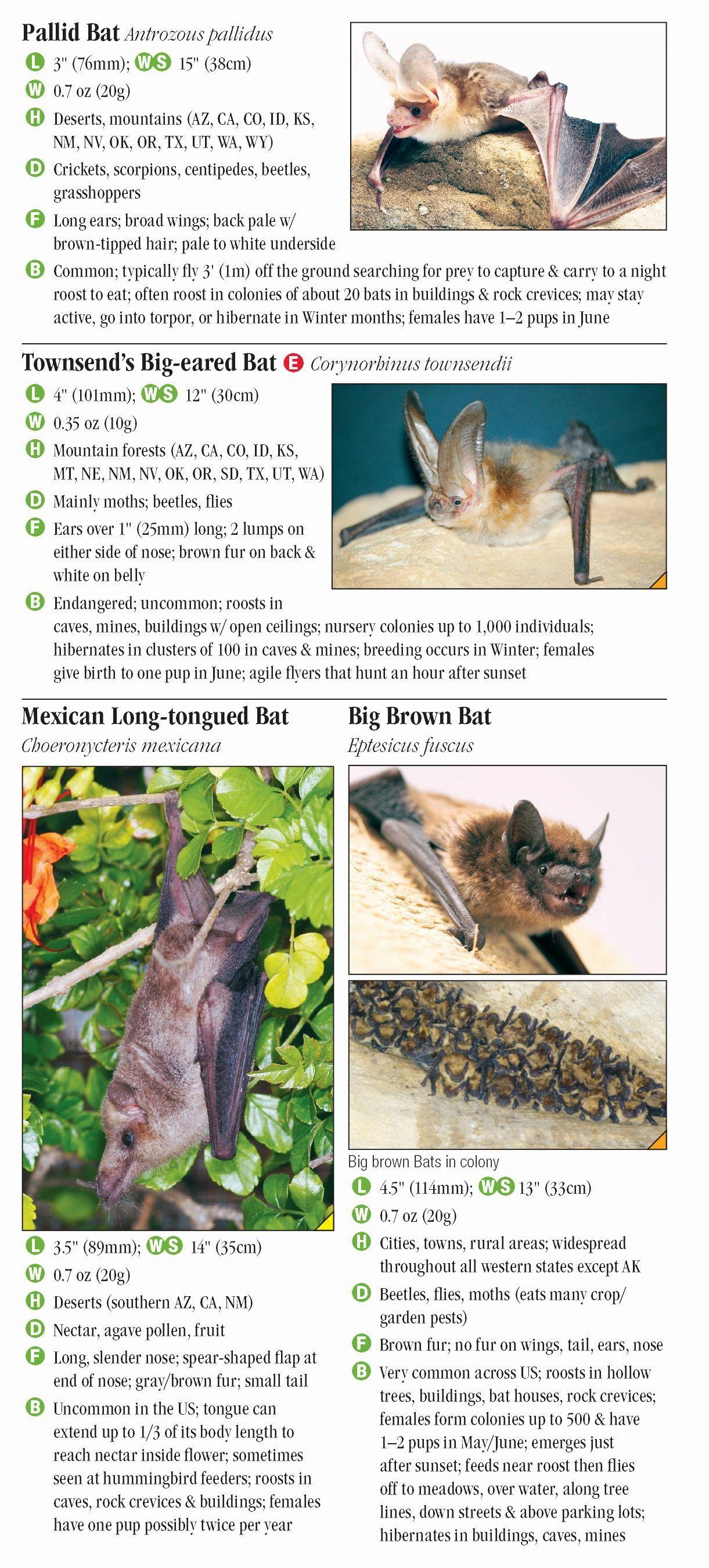 Bats Of Western North America Quick