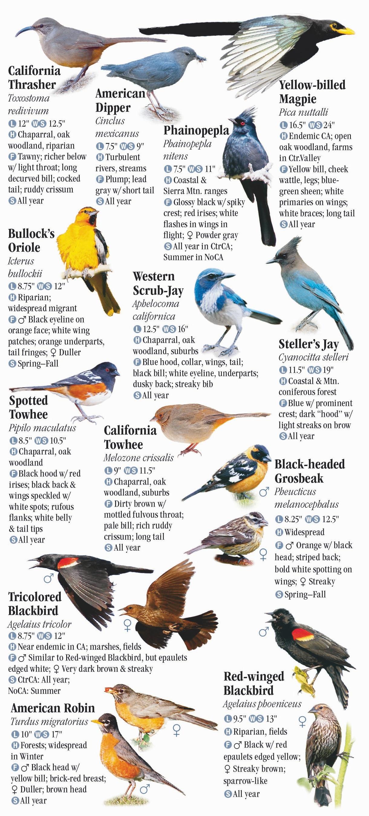 Farallon Islands Birding Tours