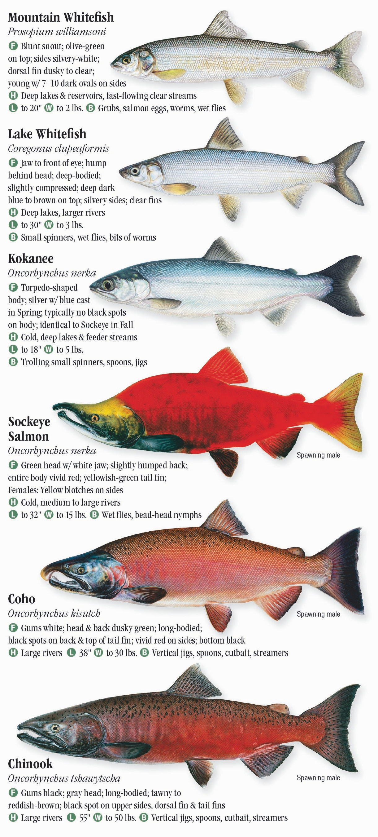 Freshwater Fishes of the Northern Rocky Mountains – Quick Reference ...