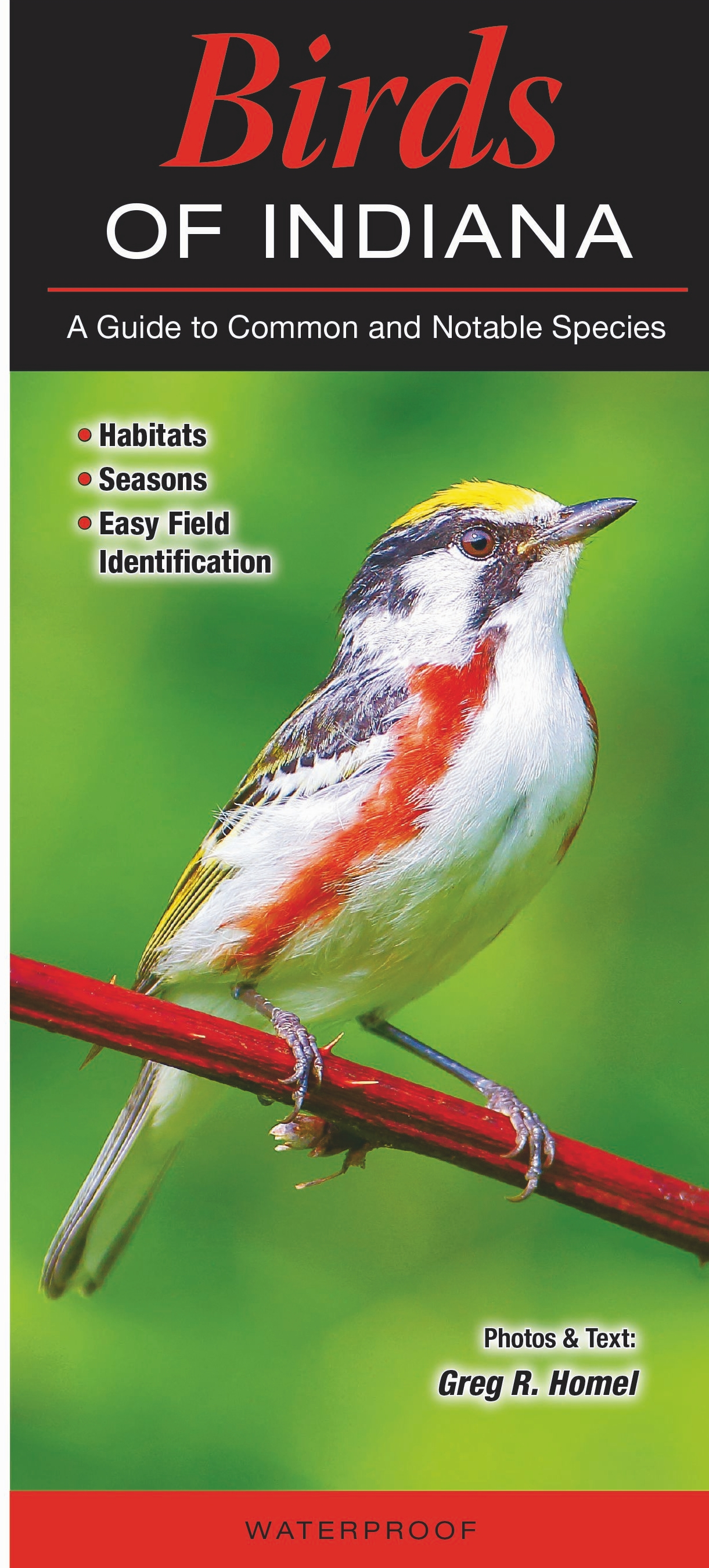 Pictures of birds native to indiana