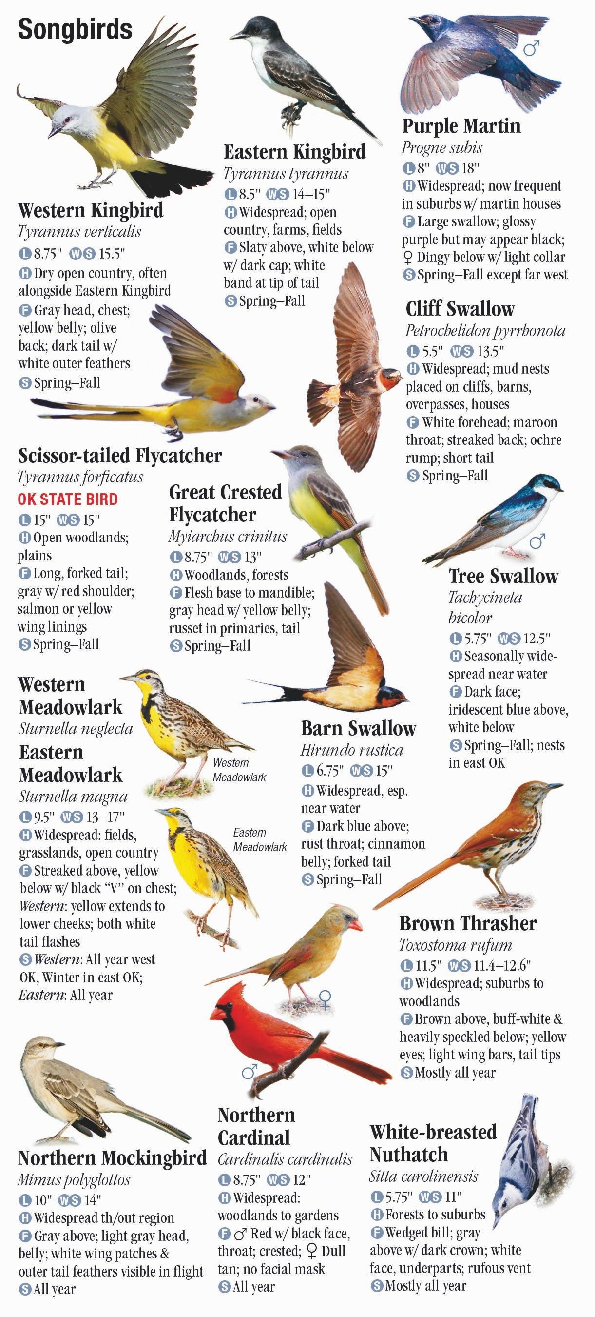 birds of oklahoma quick reference publishing