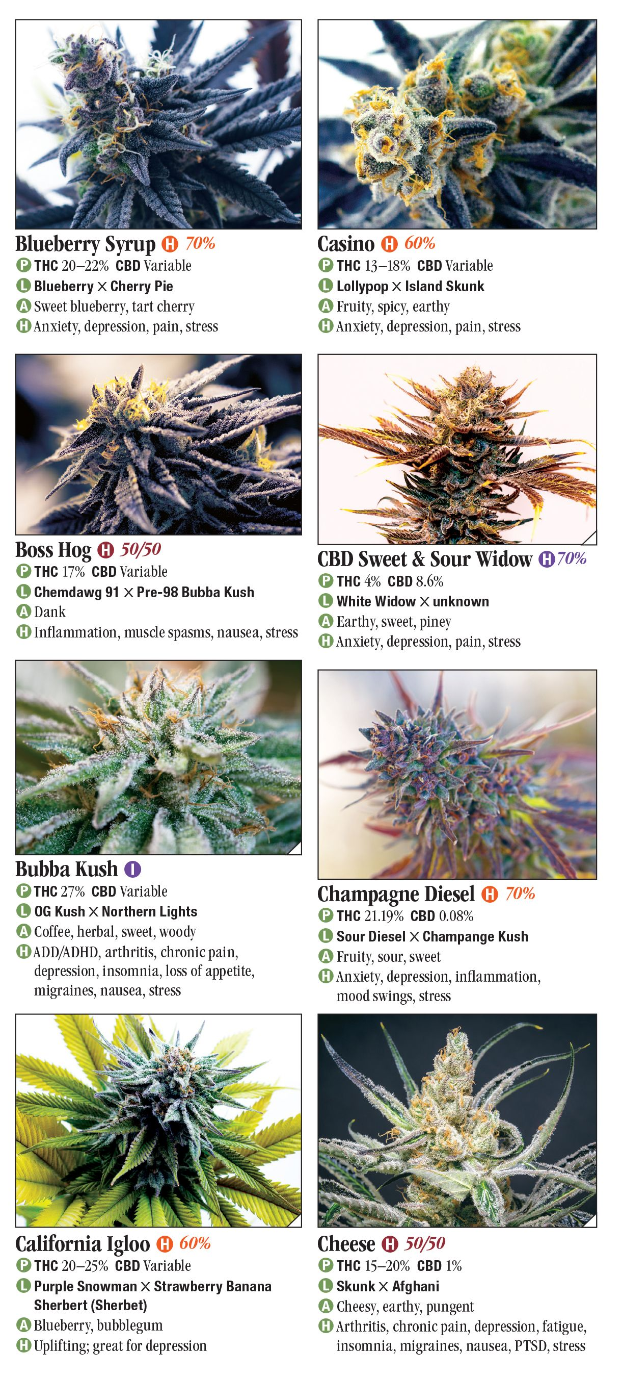 Cannabis: A Guide to Common and Exotic Strains – Quick