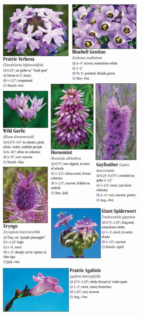 Wildflowers of Central Texas – Quick Reference Publishing